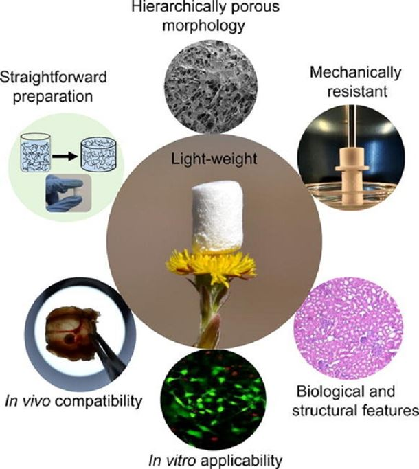 Porous nanocellulose gels and foams: Breakthrough status in the development of scaffolds for tissue engineering