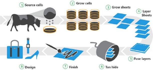 Figure 1. Overview of the process of fabricating a leather-like material, including sourcing of cells, expansion and culture, followed by the fusion of multiple layers to form a leather-like material which can be tanned, finished and used for a variety of non-medical applications.