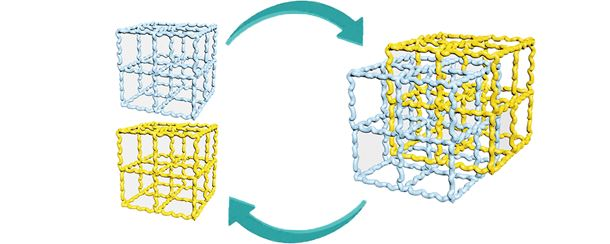 Reversible fusion and de-fusion of immiscible polymers starting from crosslinked networks