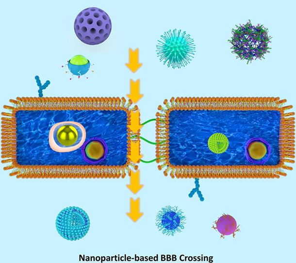 Overcoming blood–brain barrier transport: Advances in nanoparticle-based drug delivery strategies