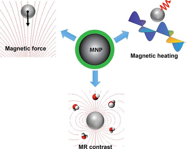 Magnetic iron oxide nanoparticles for disease detection and therapy