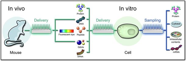 Engineered nano-bio interfaces for intracellular delivery and sampling: Applications, agency and artefacts