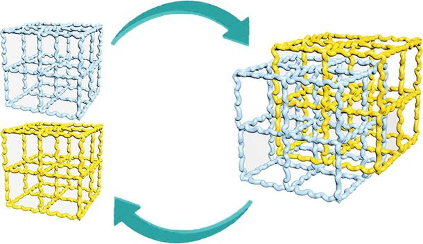 Topological rearrangement-derived homogeneous polymer networks capable of reversibly interlocking: From phantom to reality and beyond