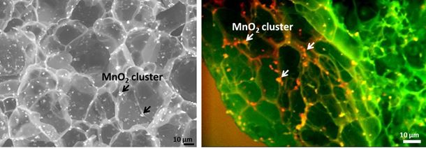 Figure 1. (Left) SEM image of the surface of a glucose-responsive composite membrane containing MnO2 nanoparticles. The large contrast of electron density between the MnO2 nanoparticles and the biopolymer matrix enables the visualization of the distribution of MnO2 clusters in the membrane. (Right) Cross-sectional ESEM image of the composite membrane. The color coded back-scattering image shows the base matrix in green and MnO2 NPs in red and yellow.