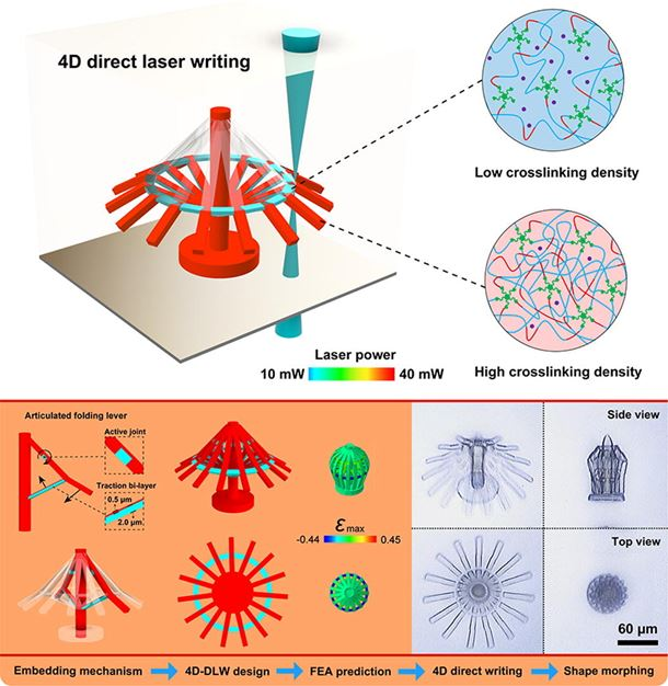 Four-dimensional direct laser writing of reconfigurable compound micromachines