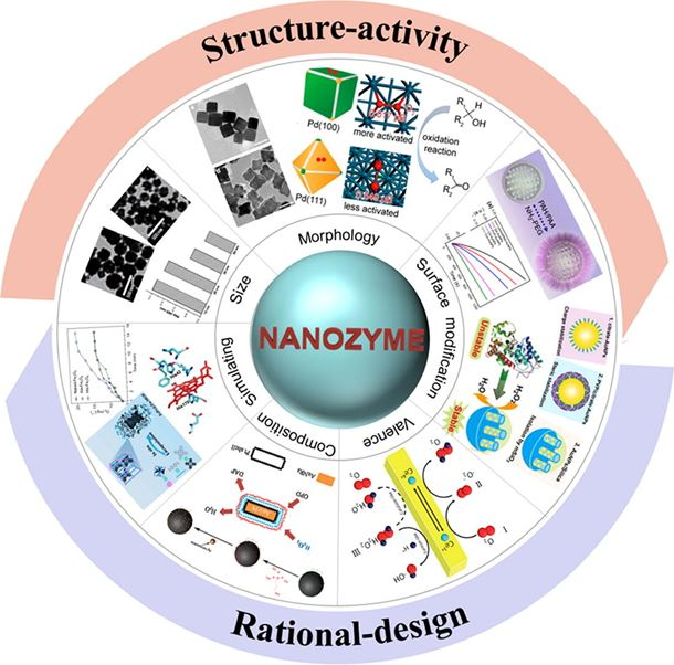 Structure and activity of nanozymes: Inspirations for de novo design of nanozymes